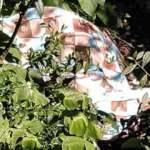 Arazi kavgasında 3 akrabasını öldüren şahıs ölü bulundu