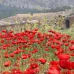 Hiyerapolis Antik Kenti'nde bahar güzelliği