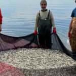 İznik Gölü'nde gümüş balığı bereketi
