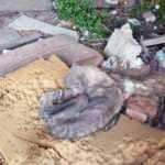 Açlıktan ölmek üzere olan kangal köpeği bulundu