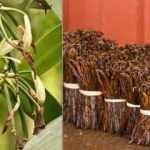 Şekerli vanilin nedir? Vanilya ile Vanilin Aynı şey midir? Şekerli vanilin neyden yapılır?