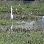 Yüksekova'da göçmen kuş yoğunlu