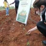 Büyükşehir'in çiftçilere sağladığı fideler toprakla buluştu!