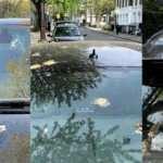 Ford'dan kuş pisliğine ilginç çözüm