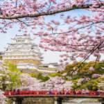 Japonya'da yeniden doğuş: Kiraz çiçeği sakura zamanı