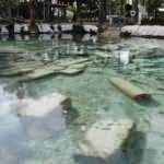 Pamukkale'deki 2 bin 500 yıllık antik havuz ve çevresi boş kaldı