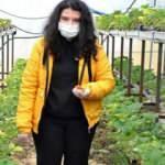 Engelli genç kız İŞKUR'un desteğiyle çilek yetiştiriciliği yapıyor