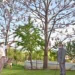 Evinin bahçesinde dünyanın en hızlı büyüyen ağacını yetiştiriyor