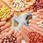 Tohumda milliyetçilik gıdada egemenlik getirir