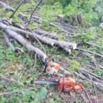 Başına ağaç dalı düşen gencin acı ölümü