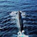 Denizaltıların kalbi milli sistemle atacak