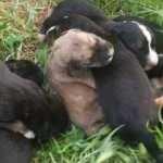 Poşetin içinde bulunan köpek yavruları son anda kurtarıldı
