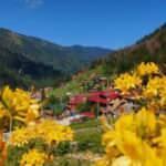 Doğu Karadeniz'in incisi Ayder turizm sezonuna hazır
