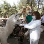 Gaziantep hayvanat bahçesi, yeniden açılışı için gün sayıyor