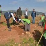 """Mersin'de işgal edilmek istenen ormanlık alan  """"İdlib Şehitleri Hatıra Ormanı"""" oldu"""