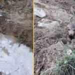 Su kanalından çıkan 10 kurt yavrusu şaşkına çevirdi