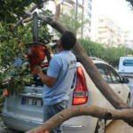 Park halindeki aracın üstüne ağaç düştü