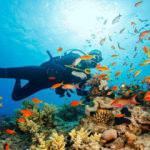 Türkiye'nin dalış merkezleri ziyaretçilerini bekliyor