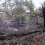 Antalya'da 90 zeytin ağacı yandı