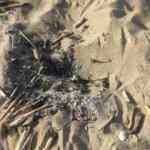 Caretta caretta yuvasının üzerinde ateş yakıldı