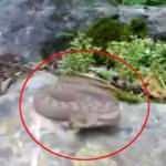 Doğada çekim yapan vatandaşa, Türkiye'nin en zehirli yılan türü saldırdı