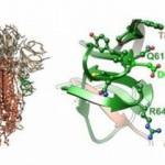 Koronavirüs 3 ülkede mutasyona uğradı: 10 kat daha bulaşıcı ve 4 kat daha ölümcül