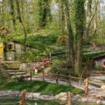 Kocaeli Ormanya yaşam alanı rengarenk bir dünya