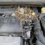Otomobilin motoruna yuvalayan fare çıkarılamadı