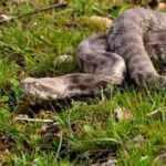 Uzmandan yılanları öldürmeyin uyarısı!
