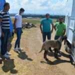 10 yıldır baktığı Kangal köpeğini, TSK'ya hediye etti