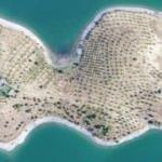 """Bakan Pakdemirli'nin talimatıyla """"Robinson Ziya""""nın adasında hasat yapıldı"""