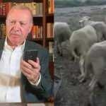 Başkan Erdoğan, hayvanları telef olan çiftçiye 16 koyun gönderdi