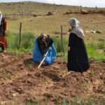 Terörün bittiği dağlarda tarım ve hayvancılık canlandı