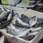 Yaz mevsiminde kültür balıkları tezgahlarda yer alıyor