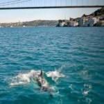 İstanbul Boğazı'nda yunuslar görüntülendi