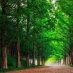 Dünyada orman varlığı azalırken, Türkiye'de arttı