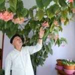Eşinin hatırasını 10 senedir baktığı çiçekle yaşatıyor