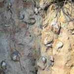 Kayalıkların içinde yüzlerce fosil! Uzmanlara davet