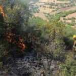 Manisa'da orman yangını