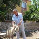 Koyunları, köpeklerce telef edilen mahalleli tedirgin