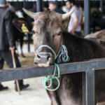 Hayvan satış yerlerine çalışma izni şartları belirlendi
