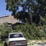 650 yıllık çınar ağacı otomobillerin üzerine devrildi