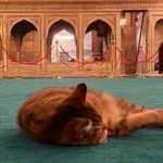 Ayasofya'nın kedisi Gli yeni halinden oldukça memnun