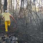 Mangaldan çıkan yangın 7 hektarlık ormanlık alanı yok etti