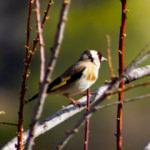 Türkiye'ninen sakin şehrinde Kuş Cenneti