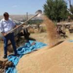 Metruk evde bulunan bir avuç ata tohumu buğdaya sahip çıkıldı