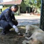Bursa'da can dostlara şefkat eli
