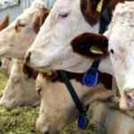 Hayvansal üretim istatistikleri açıklandı