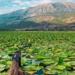 Nilüferleriyle ünlü doğa harikası 'Işıklı Gölü'