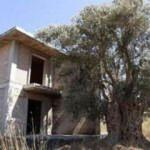 1500 yıllık zeytin ağacının hemen yanına villa yaptılar